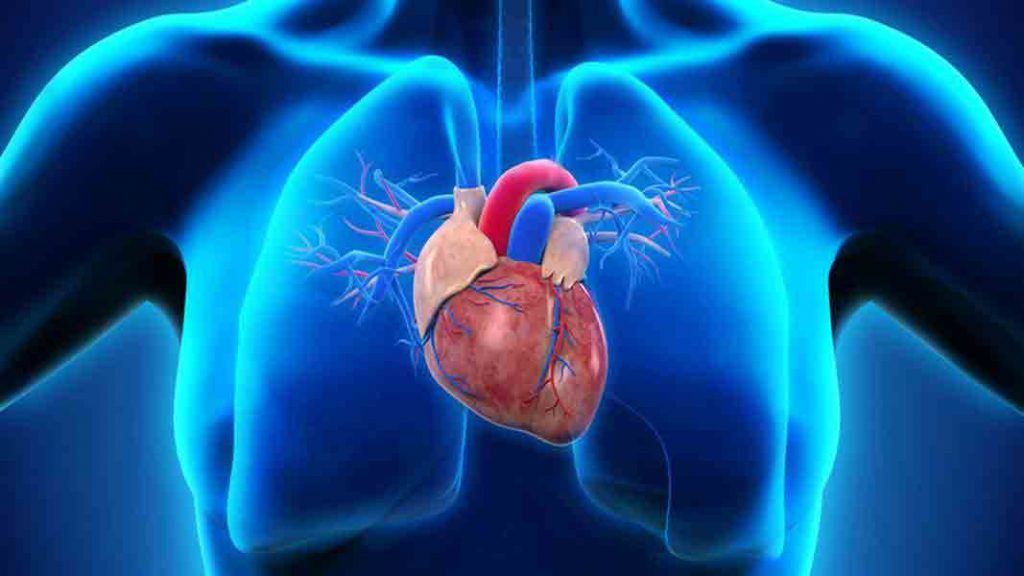 türk kalp vakfı kuruluş amacı